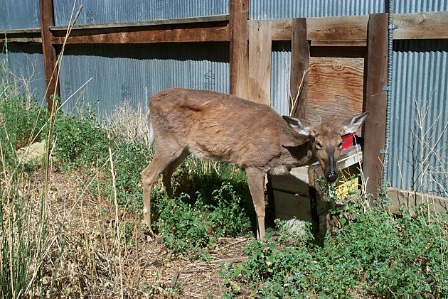 Dnr confirms michigan 39 s first case of chronic wasting for Wy game and fish