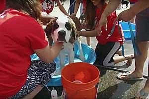 Gilda's Club World's Largest Dog Wash